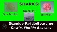 Paddle Boarding in Destin Florida - Thumbnail