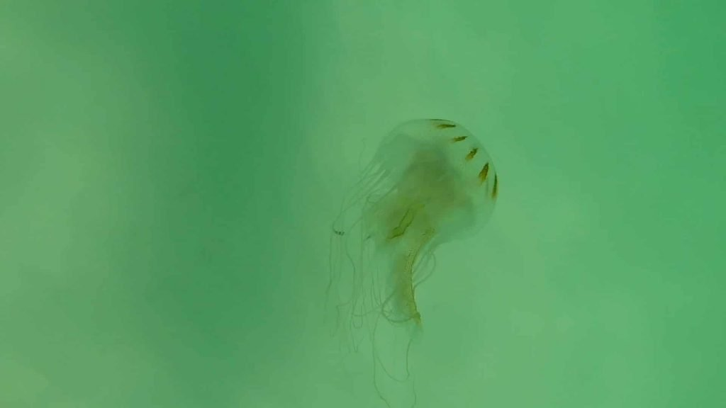 Paddle Boarding in Destin Florida - JellyFish back view