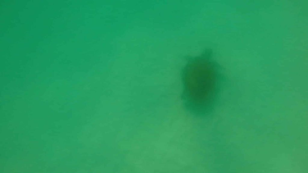 Paddle Boarding in Destin Florida -Sea Turtle on bottom