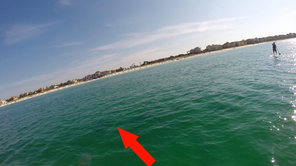 Paddle Boarding in Destin Florida - Sharks