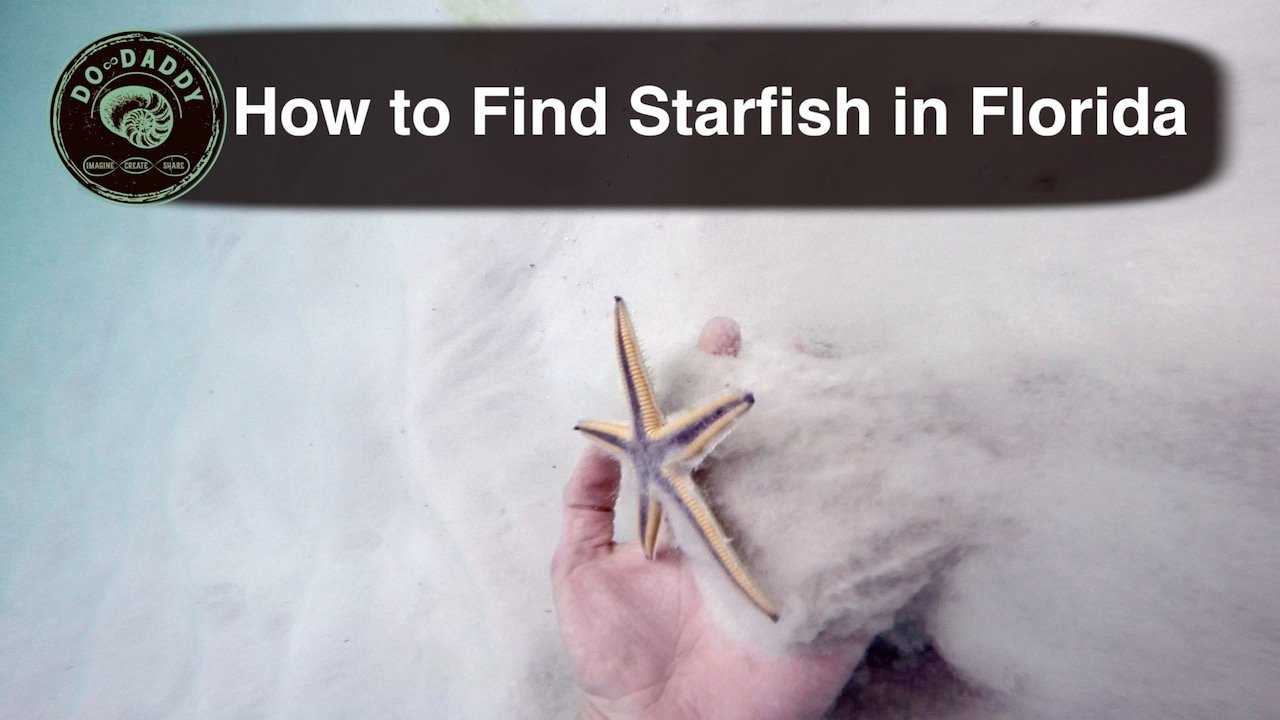 How to Find Starfish - Thumbnail - 1280720