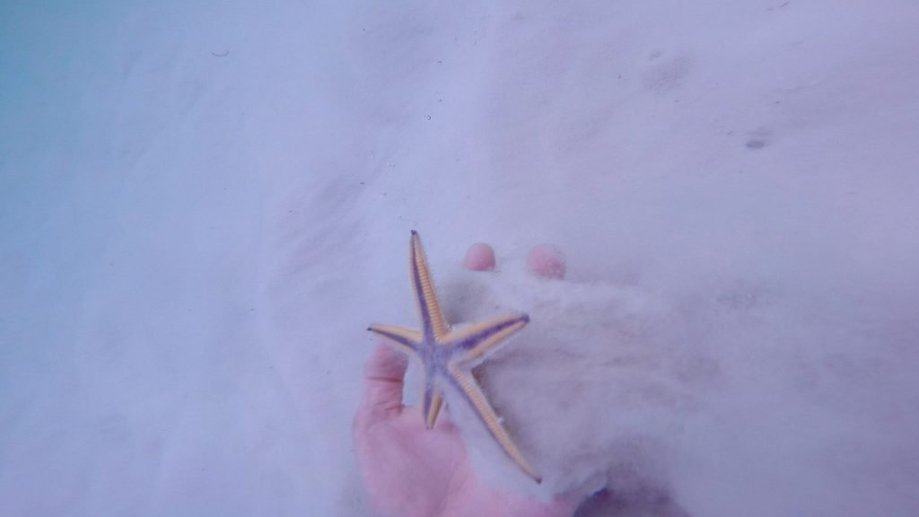how to find starfish - starfish hand