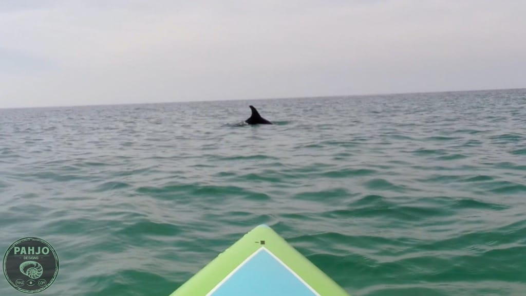 dolphins while paddle boarding in Destin, Florida