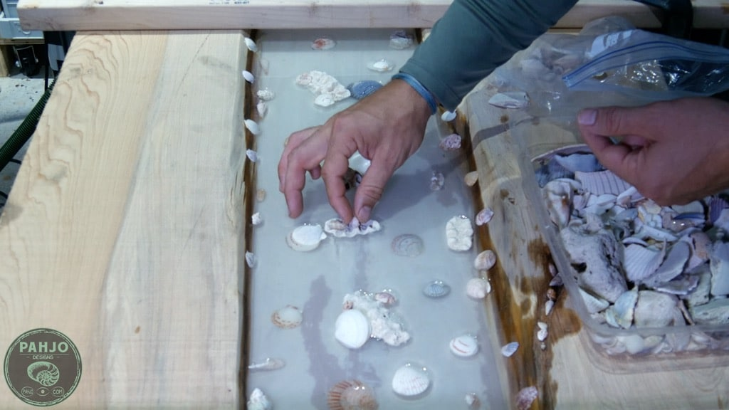 setting shells in resin